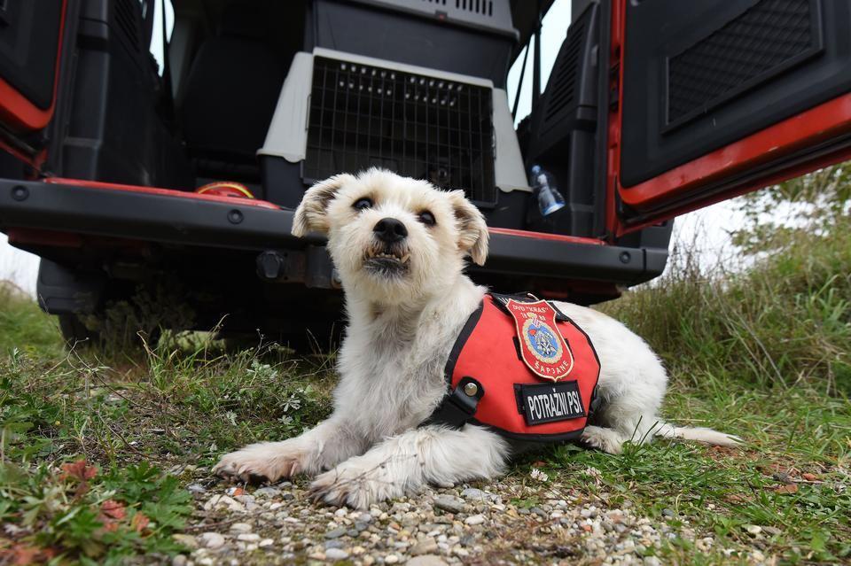 Sparky, član DVD Kras iz Šapjana, postao pas tragač