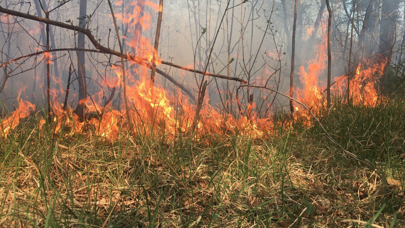 Suša i vjetar pogoduju širenju požara otvorenog prostora